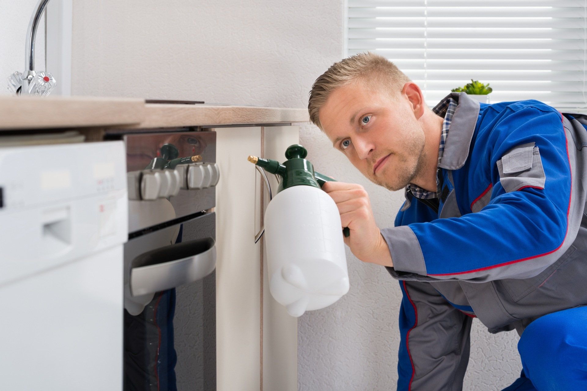 Pest Inspection, Pest Control in Herne Hill, SE24. Call Now 020 8166 9746