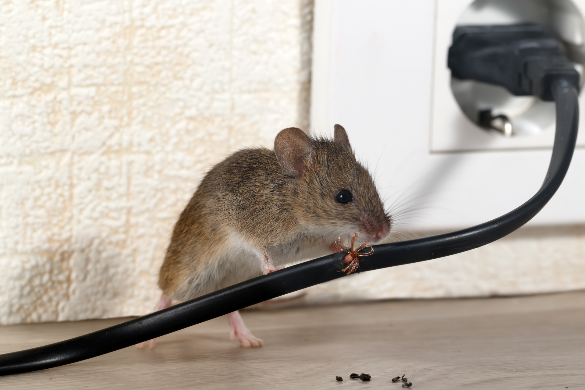 Mice Infestation, Pest Control in Herne Hill, SE24. Call Now 020 8166 9746