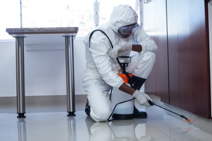 Emergency Pest Control, Pest Control in Herne Hill, SE24. Call Now 020 8166 9746